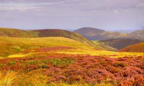 Heather covered Long Mynd
