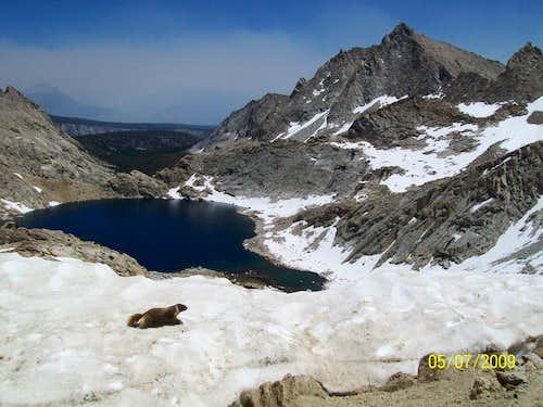 A marmot venturing across Sawtooth Pass. Needham Mountain upper-right. Columbine Lake below.