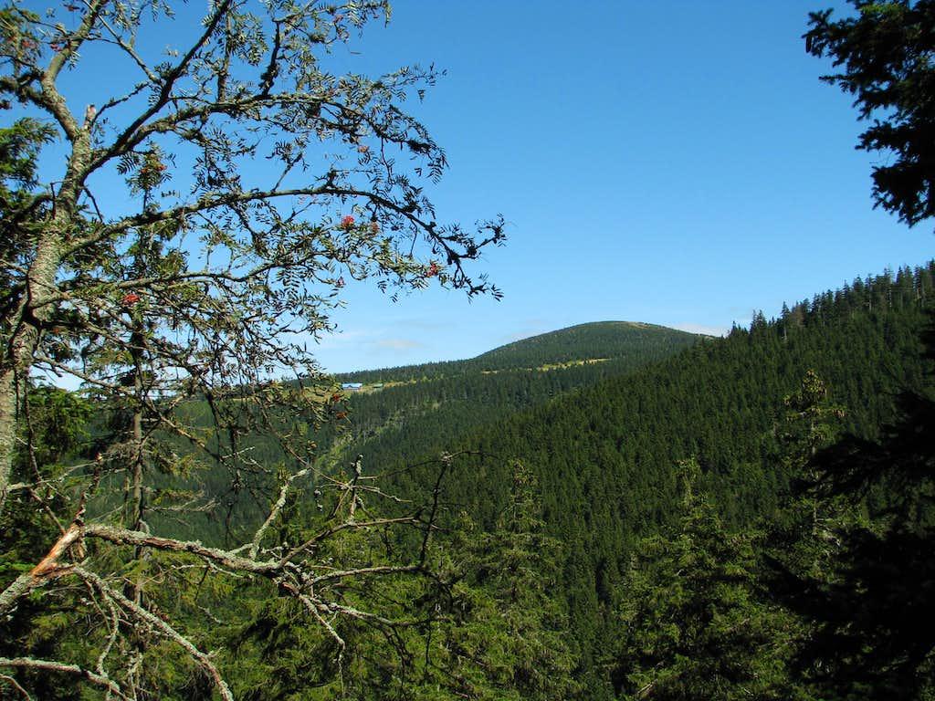 Śnieżnik seen from Dziki Stok (Wild Slope)