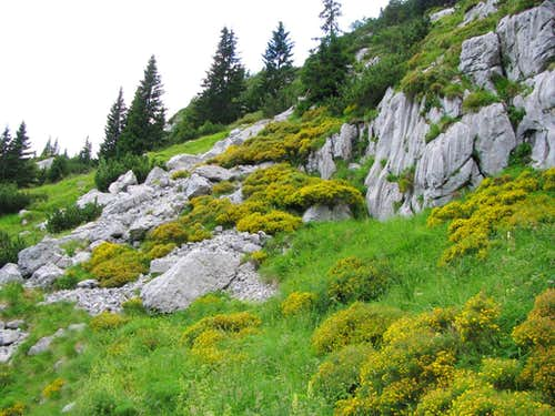 Mountain flowers in Goricica