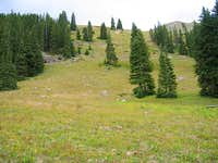 Grassy Slopes