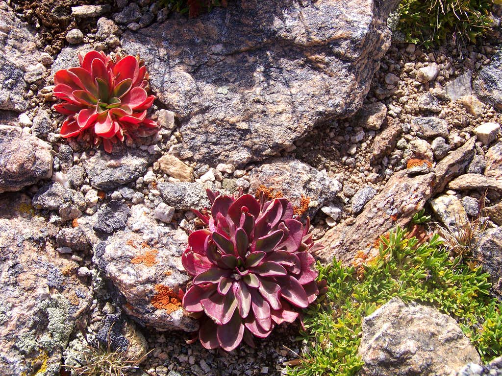 Autumn Alpine Tundra:Alpine Spring Beauty : Photos ...