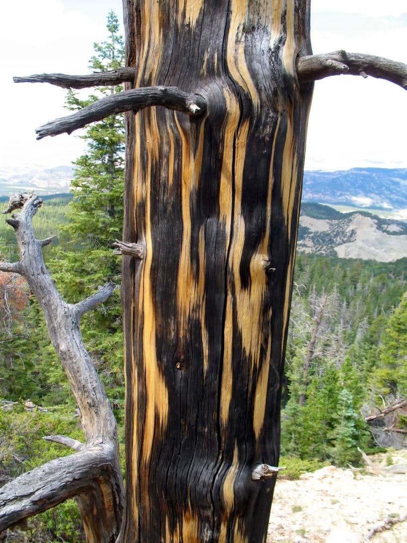 Tree coloration