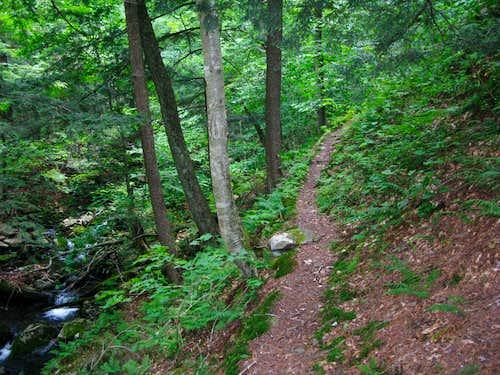 Pine Hill-West Branch trail