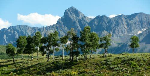 Sneffels Range peak over aspens