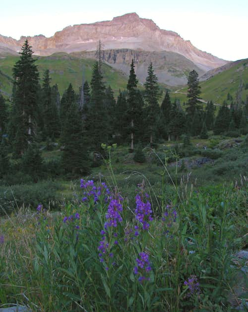 Wildflowers below Gilpin Peak