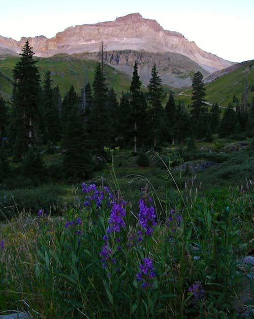 Wildflowers below Gilpin Peak