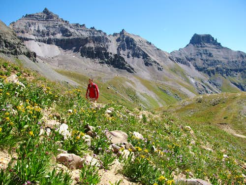 Yankee Boy Basin wildflowers