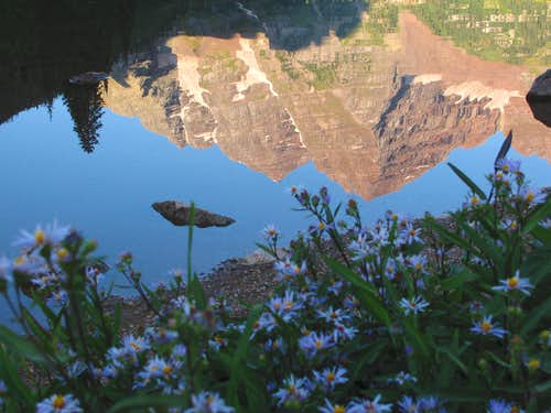 Maroon Lake wildflowers