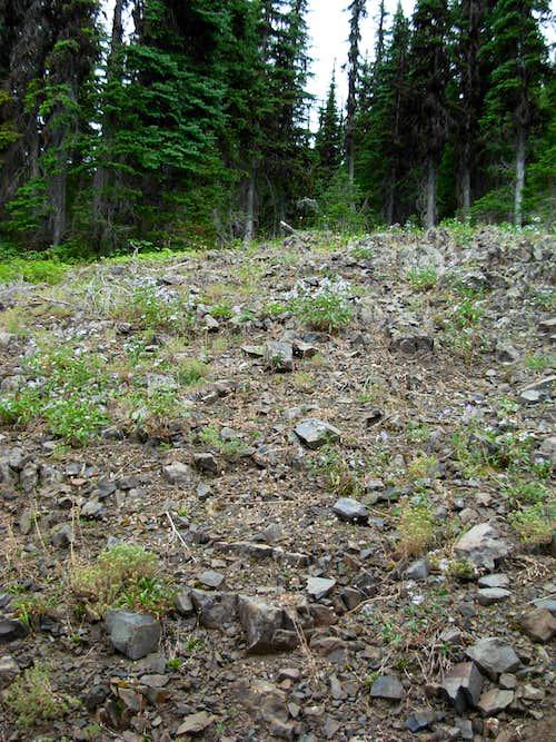 Diamond Peak Bushwhack