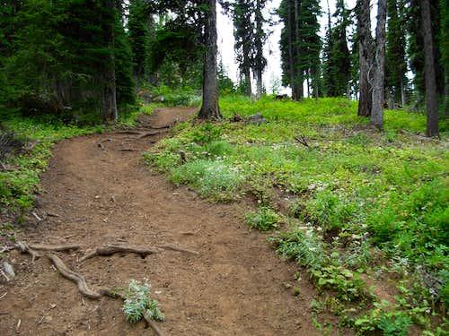 Mount Misery Trail To Diamond Peak