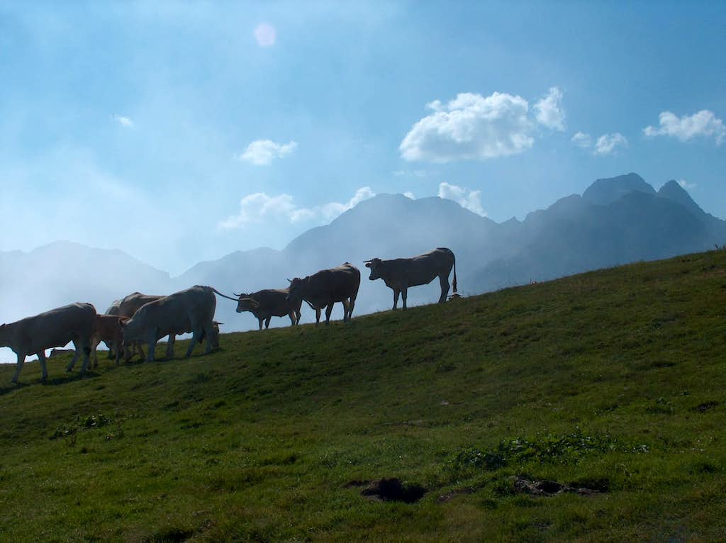 Cows in the fog on Col d'Azet