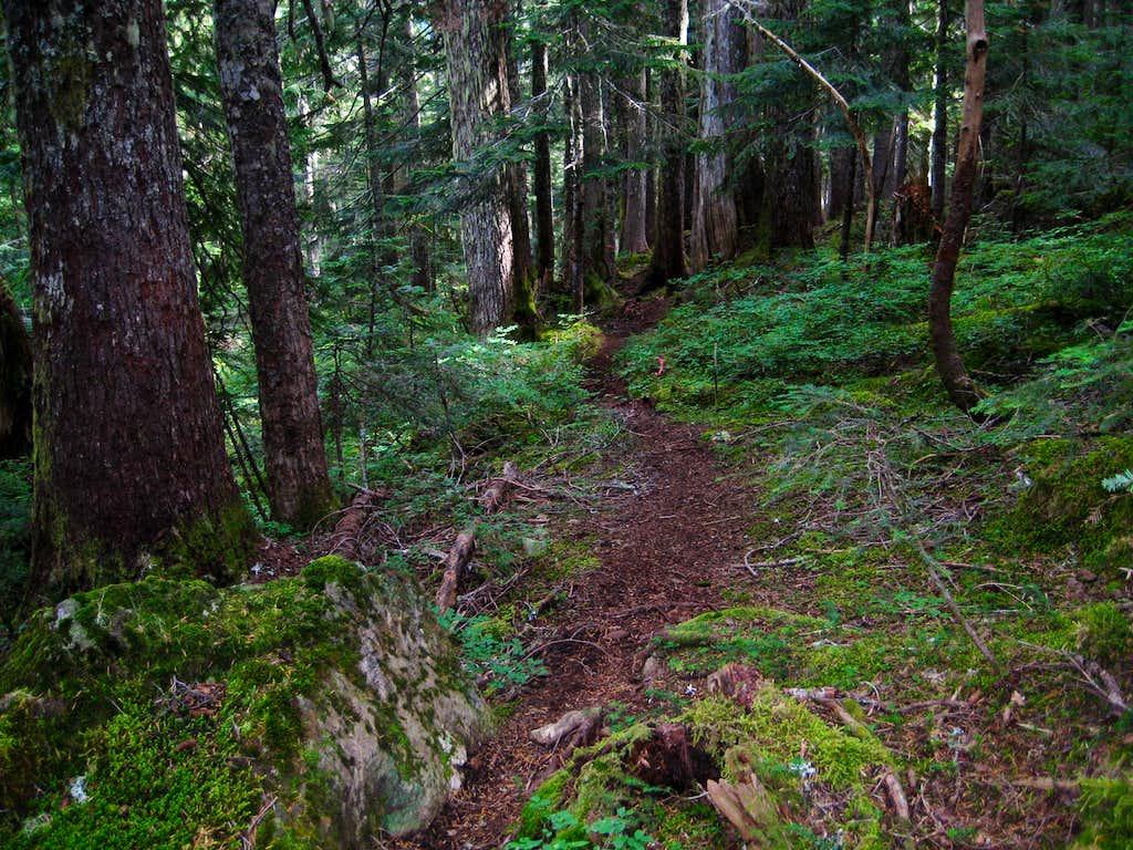 Bills Trail