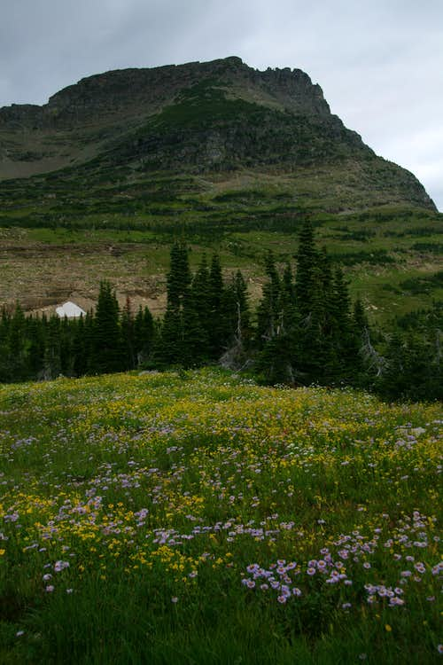 Alpine Meadows and Mount Oberlin