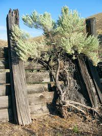 Lydle gulch,east of Boise Idaho