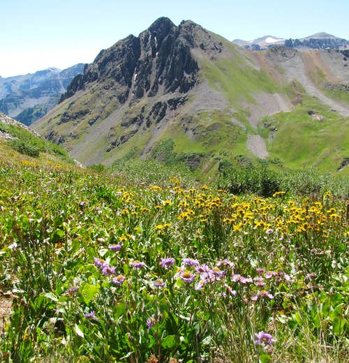 Yankee Boy Basin flowers