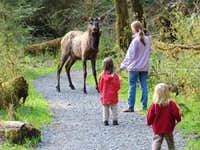 Family vs Moose Encounter Olympic NP W