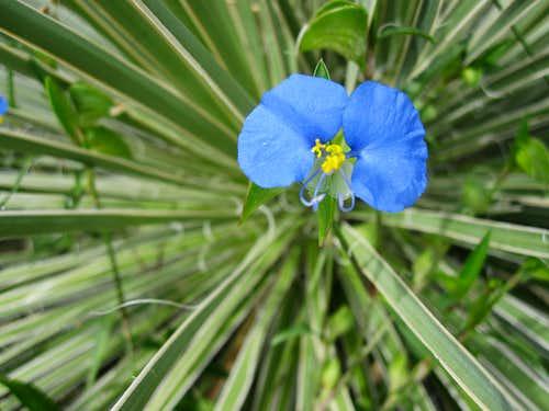 Mesa Flower