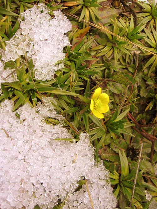 Flowers from Inca trail (ECU)