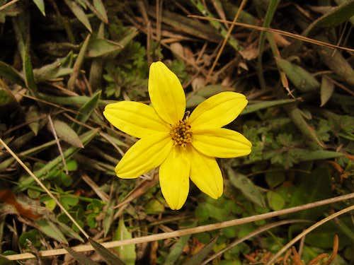 Pacunga-Fimacho-Viguiera quitensis