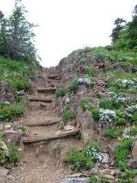 Mt. Ellinor trail