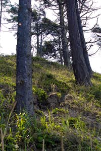 Steep hillsides are prone to erosion