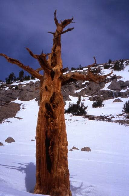 On the Kearsarge Pass trail -...