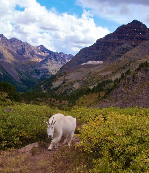 Photos, Maroon Bells - Snowmass Wilderness, Colorado