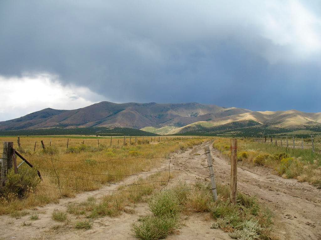 The Black Pine range