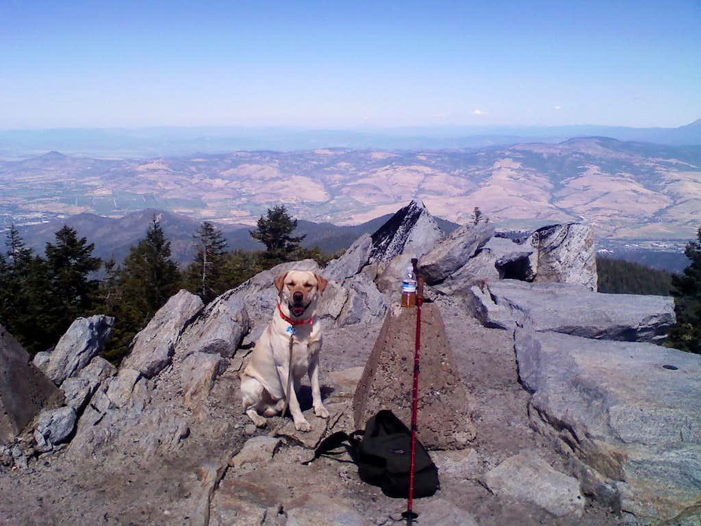 Mac (the summit dog)