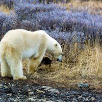 arctic moment