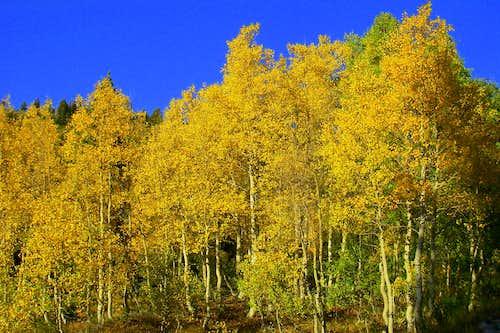 Fall Colors in Utah