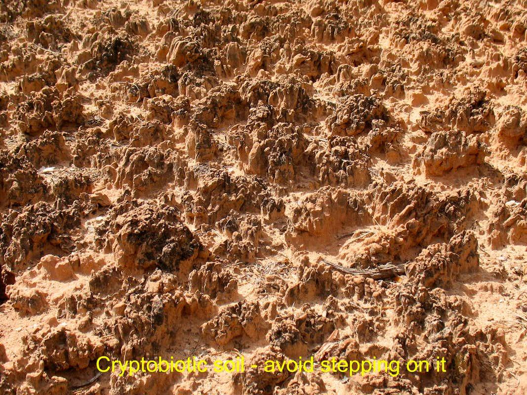 Capitol reef cryptobiotic soil photos diagrams topos for Importance of soil wikipedia