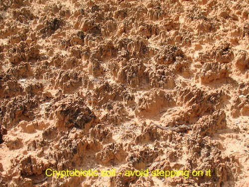 Capitol Reef Cryptobiotic soil