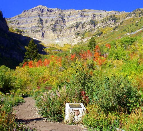 Fall Color on Aspen Grove....