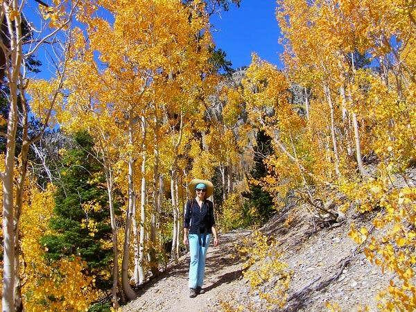 On North Loop Trail