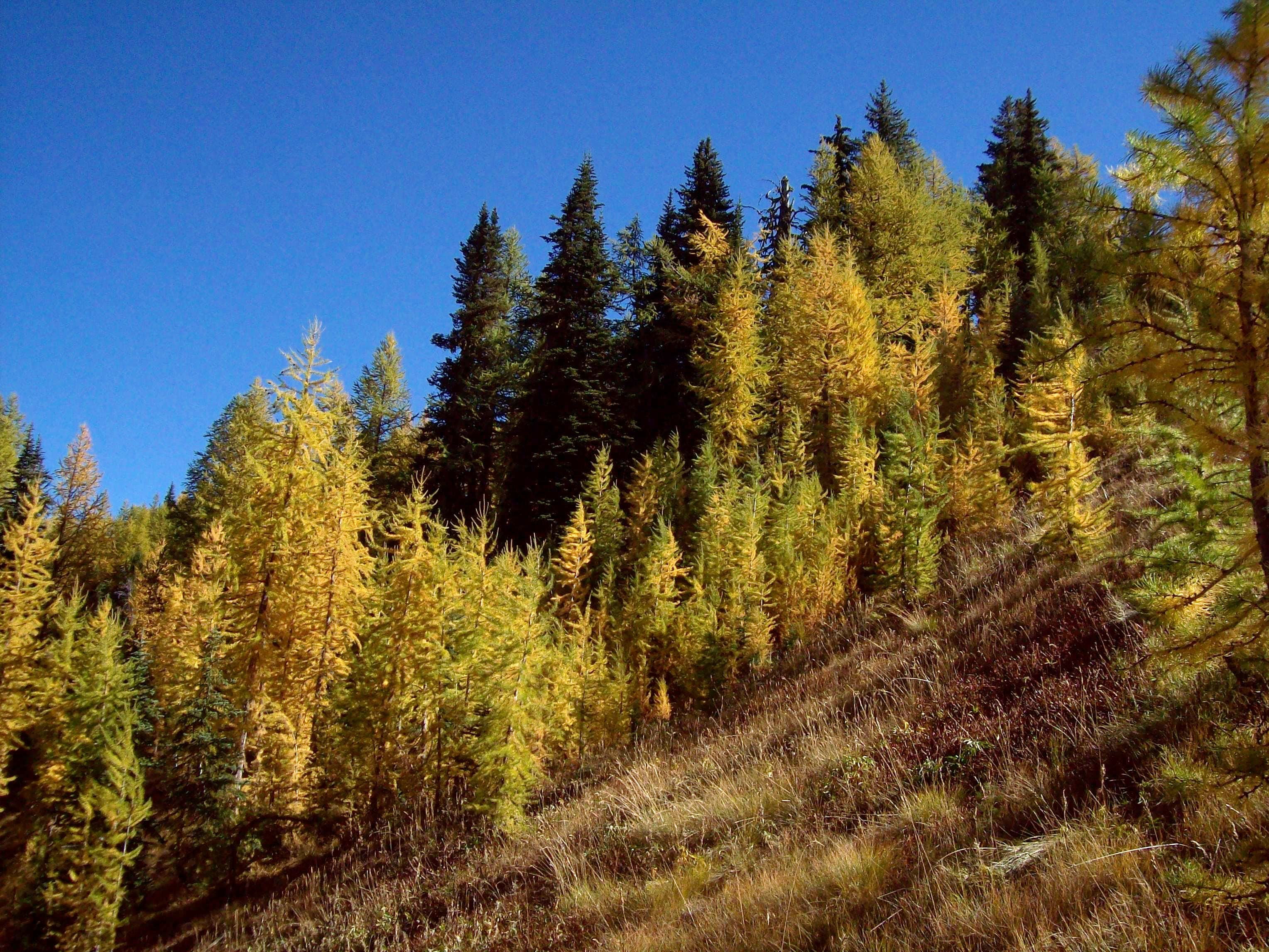 Fall Colors in Washington State 2009