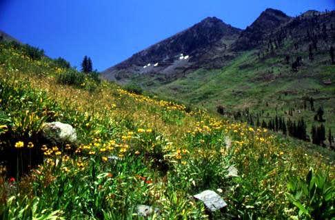 Wildflowers in Farewell...