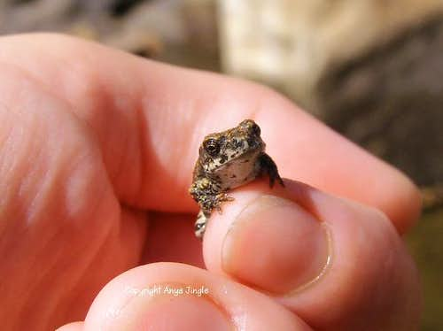 Baby Toad up close