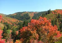 Nebo Scenic Byway Fall Colors
