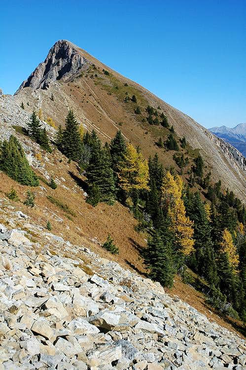 Wapiti Mountain Summit Trail