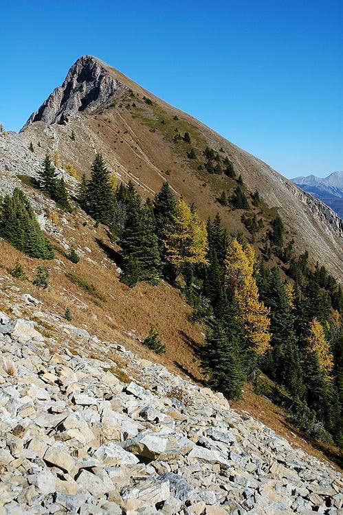 Wapiti Mountain Summit Trail