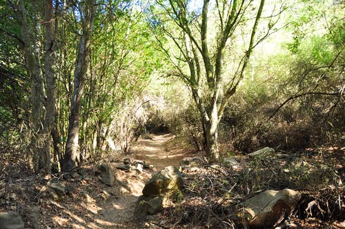 Trail to San Ysidro Canyon