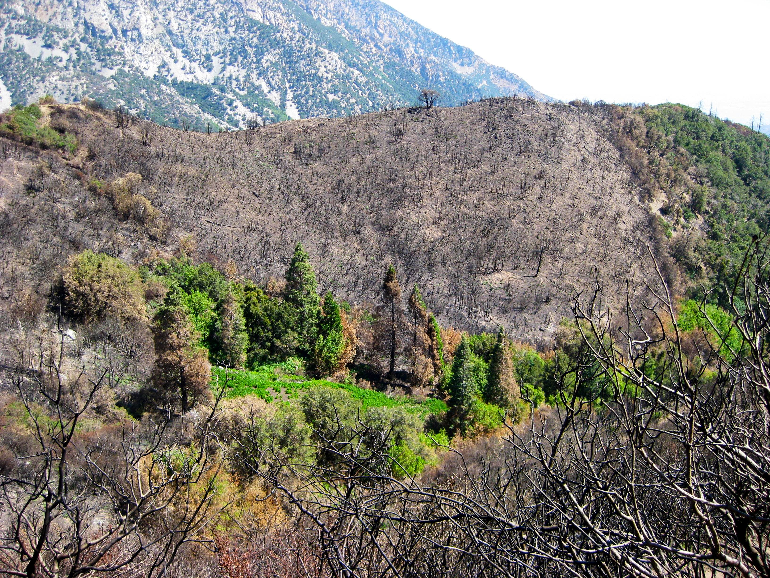 Nature\'s Renewal After the Wildfires in the San Gabriels