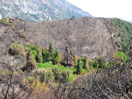 Devastation After the 2008 Wildfire