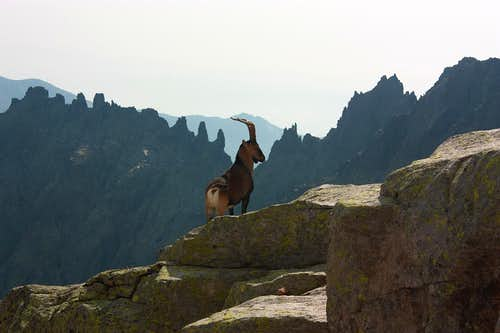 Almanzor means victorious - Sierra de Gredos 2009