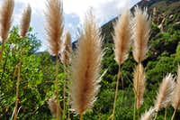 Cat-Tails along the way