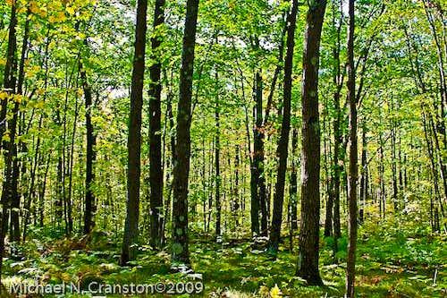 Minnesota Forests