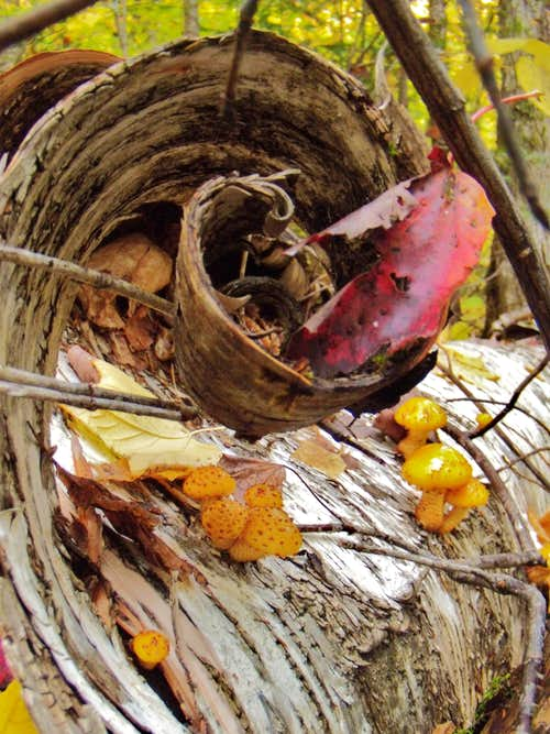 Mushroom & bark