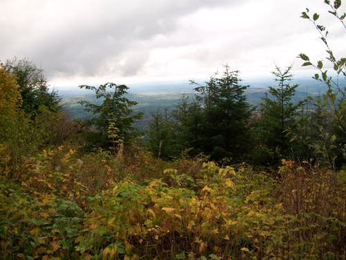 Clearcut views